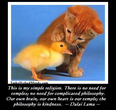 Kindness cat and bird Dalai Lama Quotes: The Philosophy is Kindness
