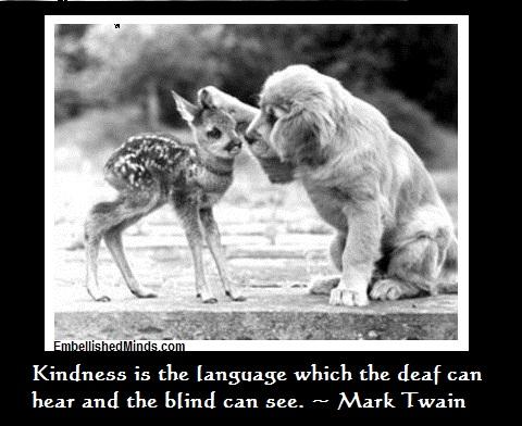 wisdom quotes - kindness