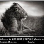 wisdom-quotes - lion