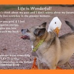 life quotes dog life 150x150 Life Quotes: page 2