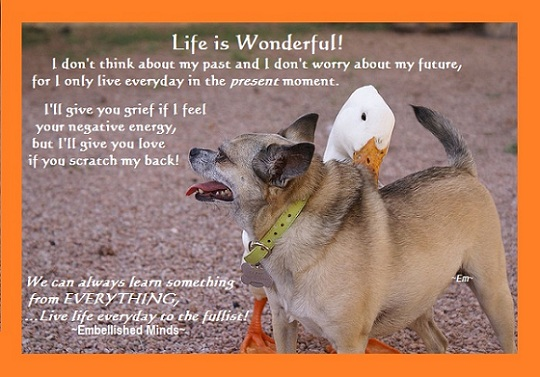life quotes dog life Life Quotes: Life is Wonderful